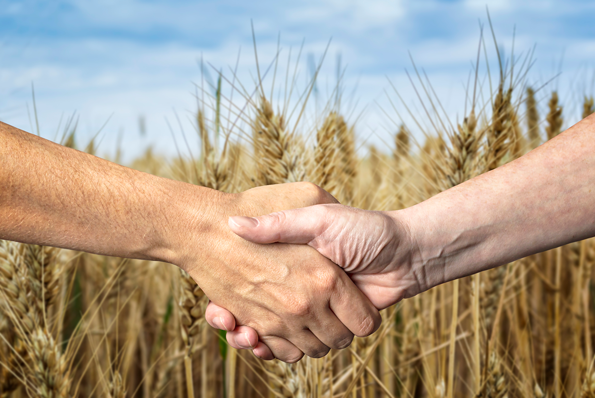 Two people shaking hands in front of wheat field